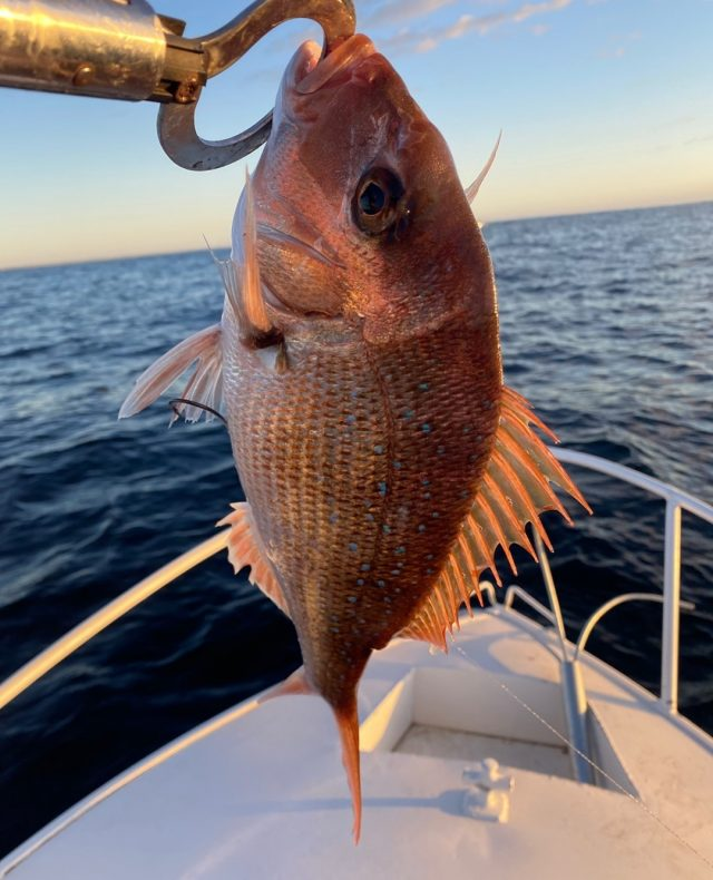 Happy Friday, folks! Rise and shine it's fishing time!🎣🛥️  What a Snapper 👌 caught by @blakeyboom  #Weekendvibe #TeamMediaShark